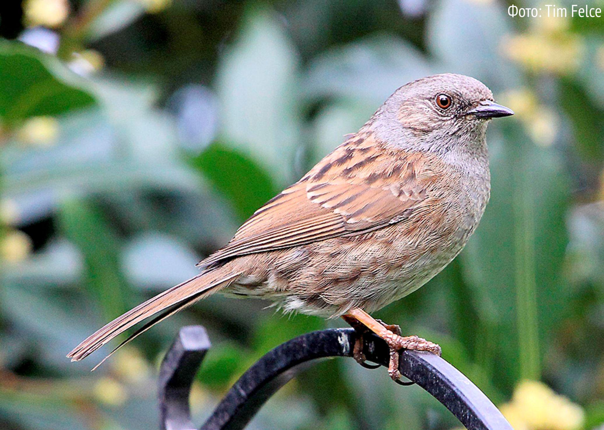 говорят птицы спб фото с названиями доказать