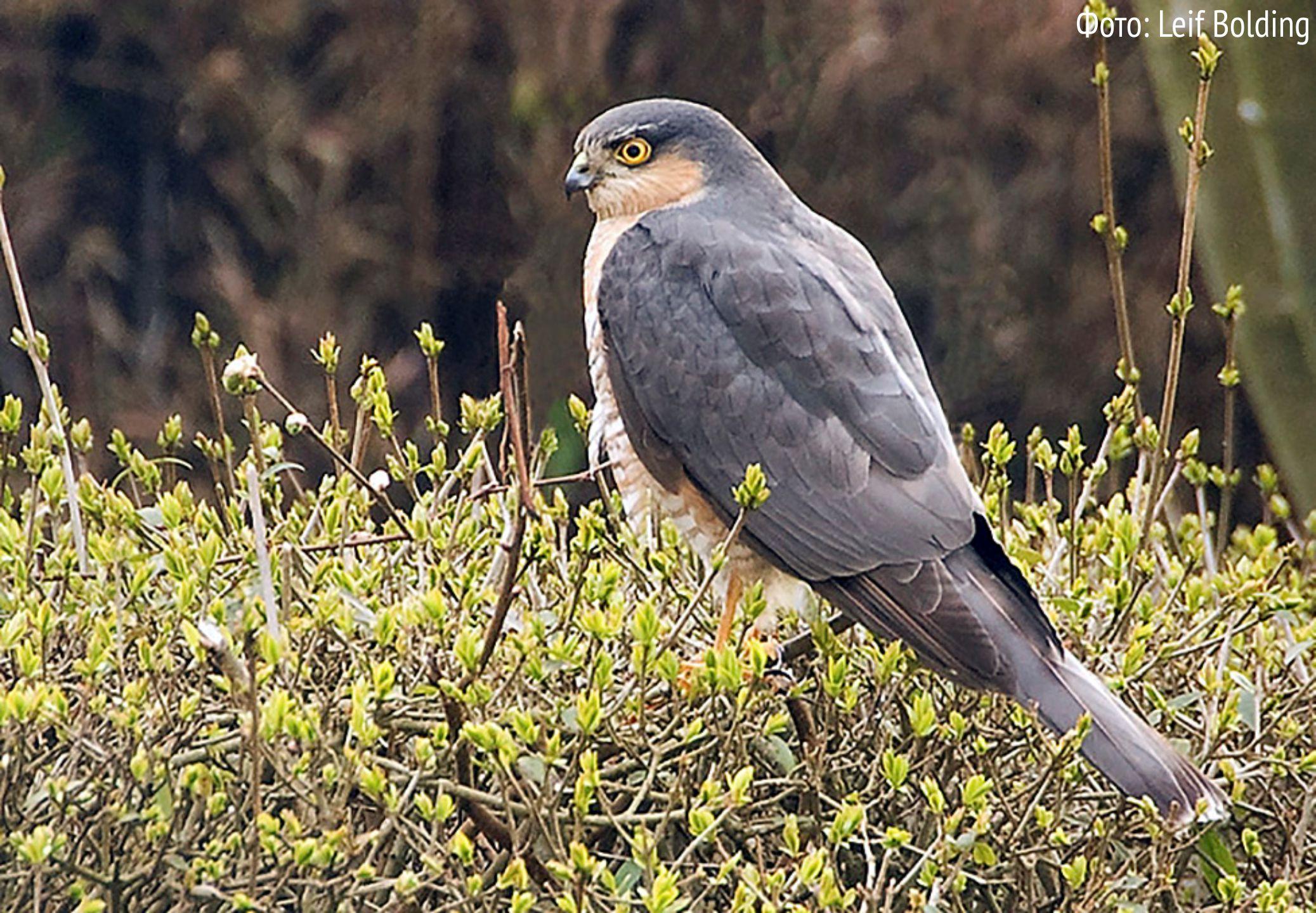 хищные птицы ленинградской области фото и названия понравилось моё преображение