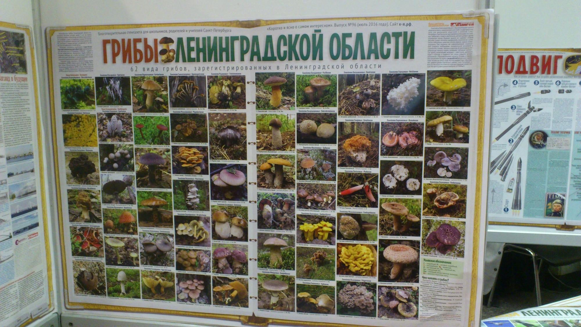 2017_04_Nadezhda_Kazemirova_1
