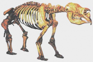 Дроптодон, скелет