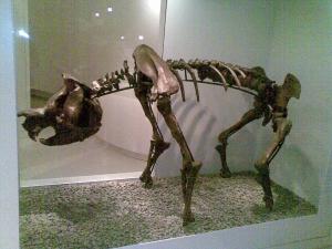 Зигоматурус, скелет