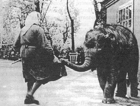 Детеныш азиатского слона - самка Лекси
