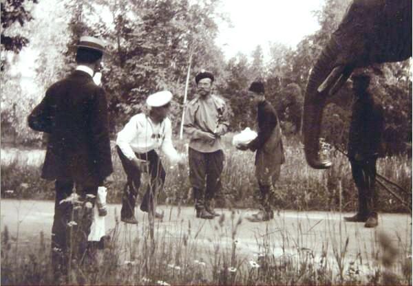 Николай II кормит слона. Царское село.