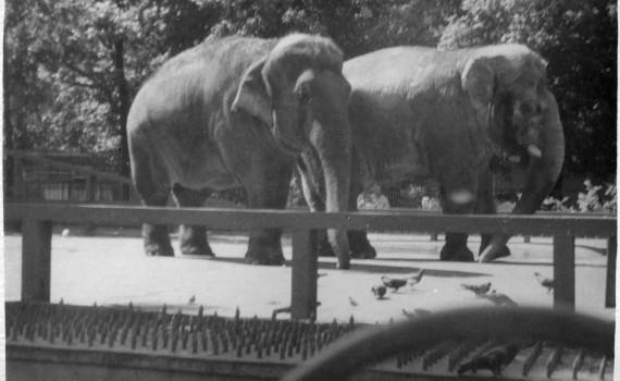 Сюн и Кроспи 1963 год