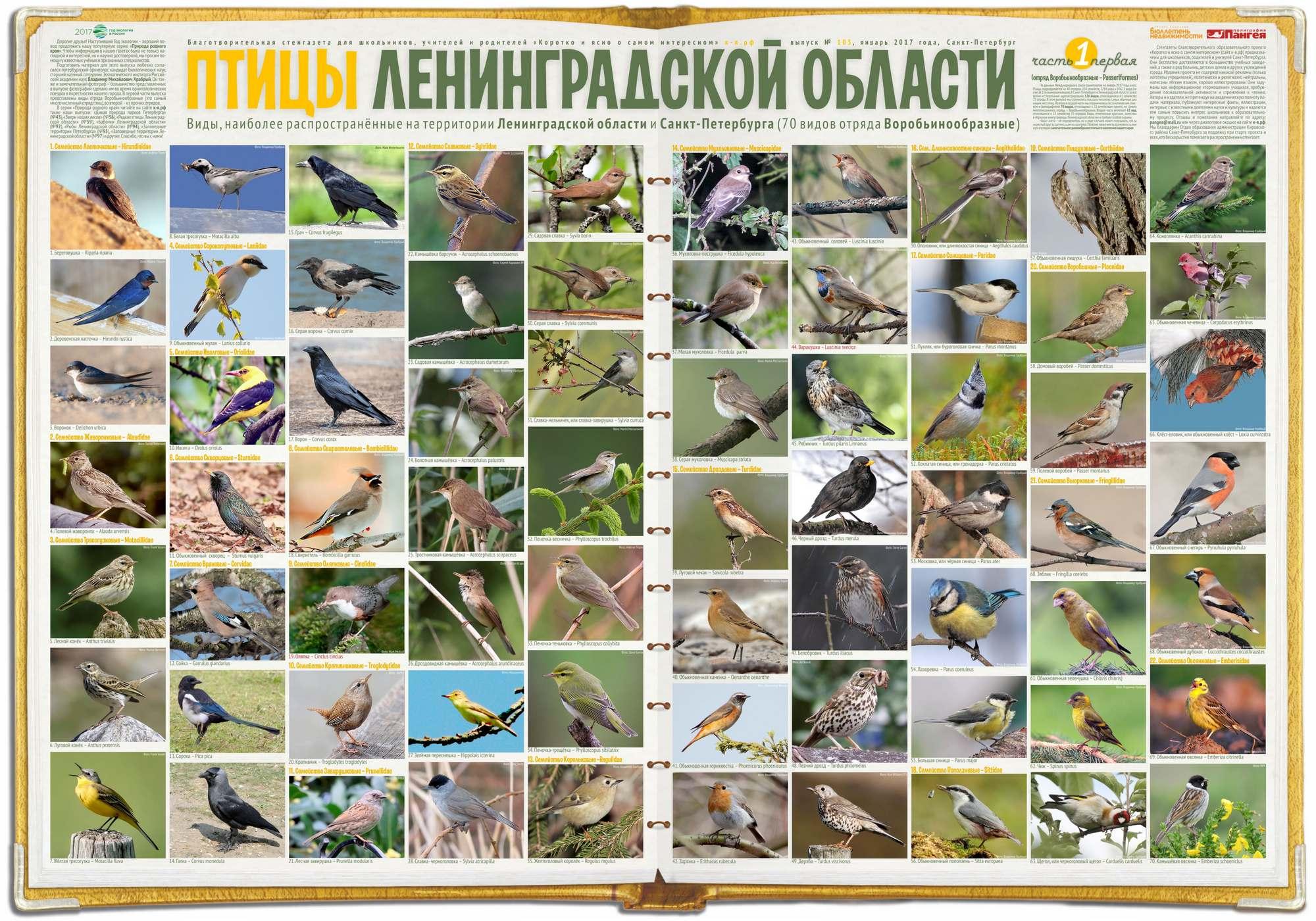 Птицы Ленинградской области – 1