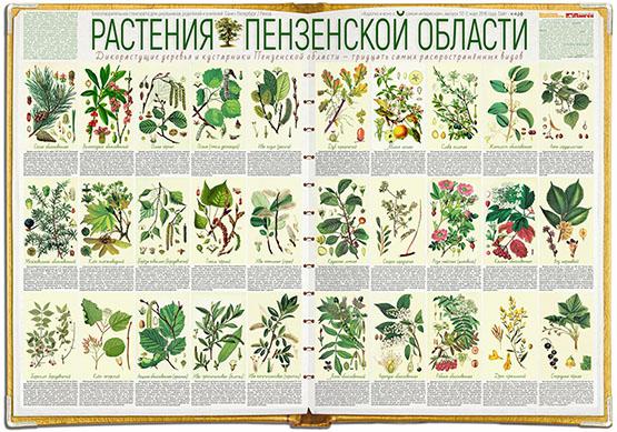 Растения Пензенской области