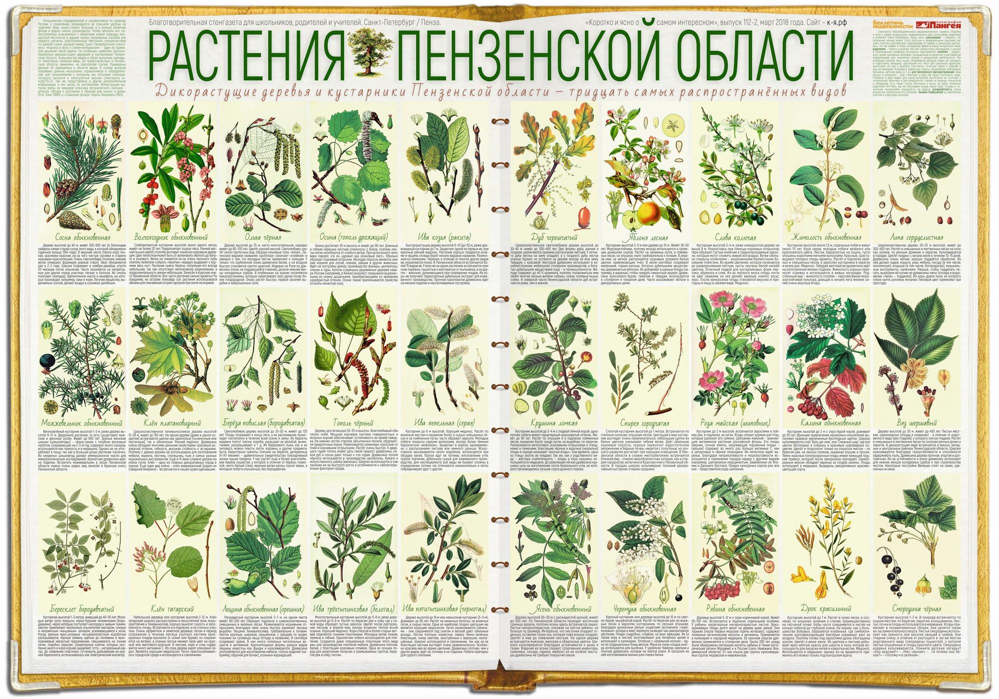 112-2. Растения Пензенской области