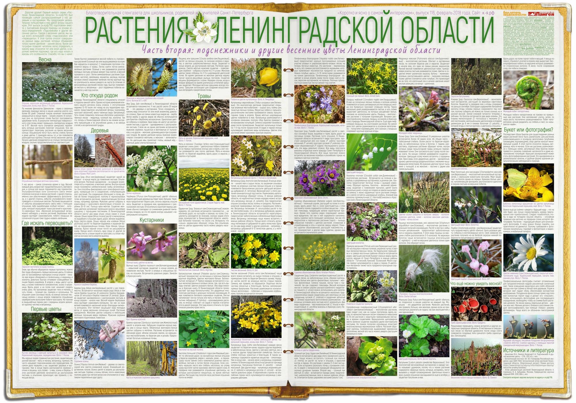 116. Растения Ленинградской области – 2