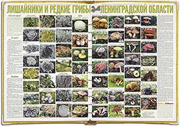 Лишайники и редкие грибы Ленинградской области