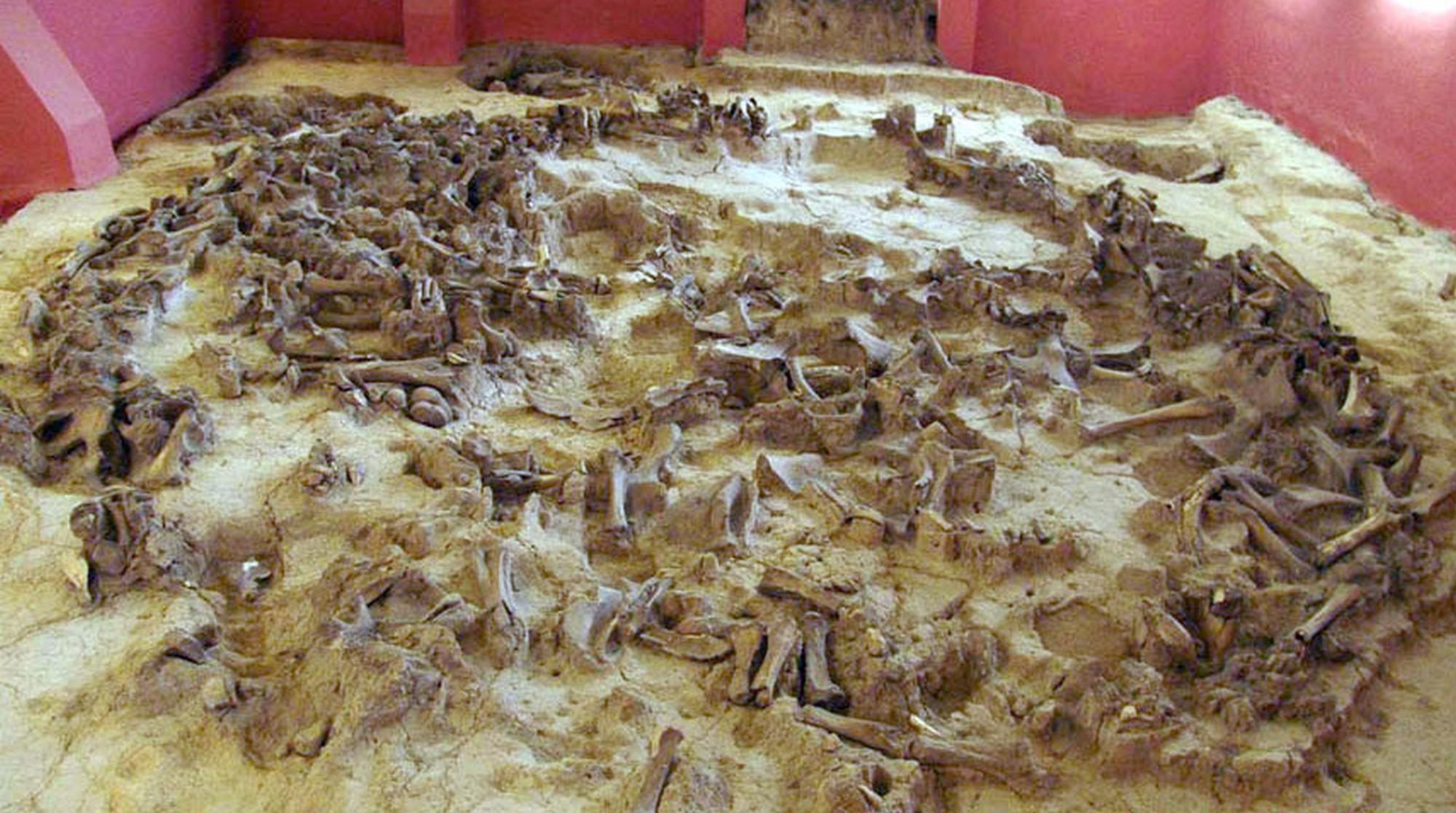 Остатки древнего жилища из костей мамонта возрастом в 20000 лет – главный экспонат Государственного археологического музея-заповедника Костёнки (kostenki-museum.ru).