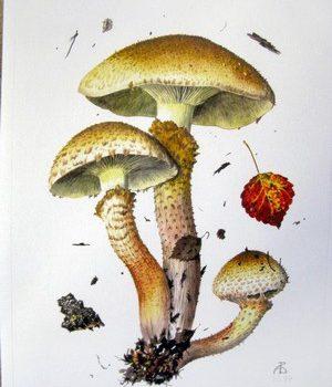 Чешуйчатка обыкновенная