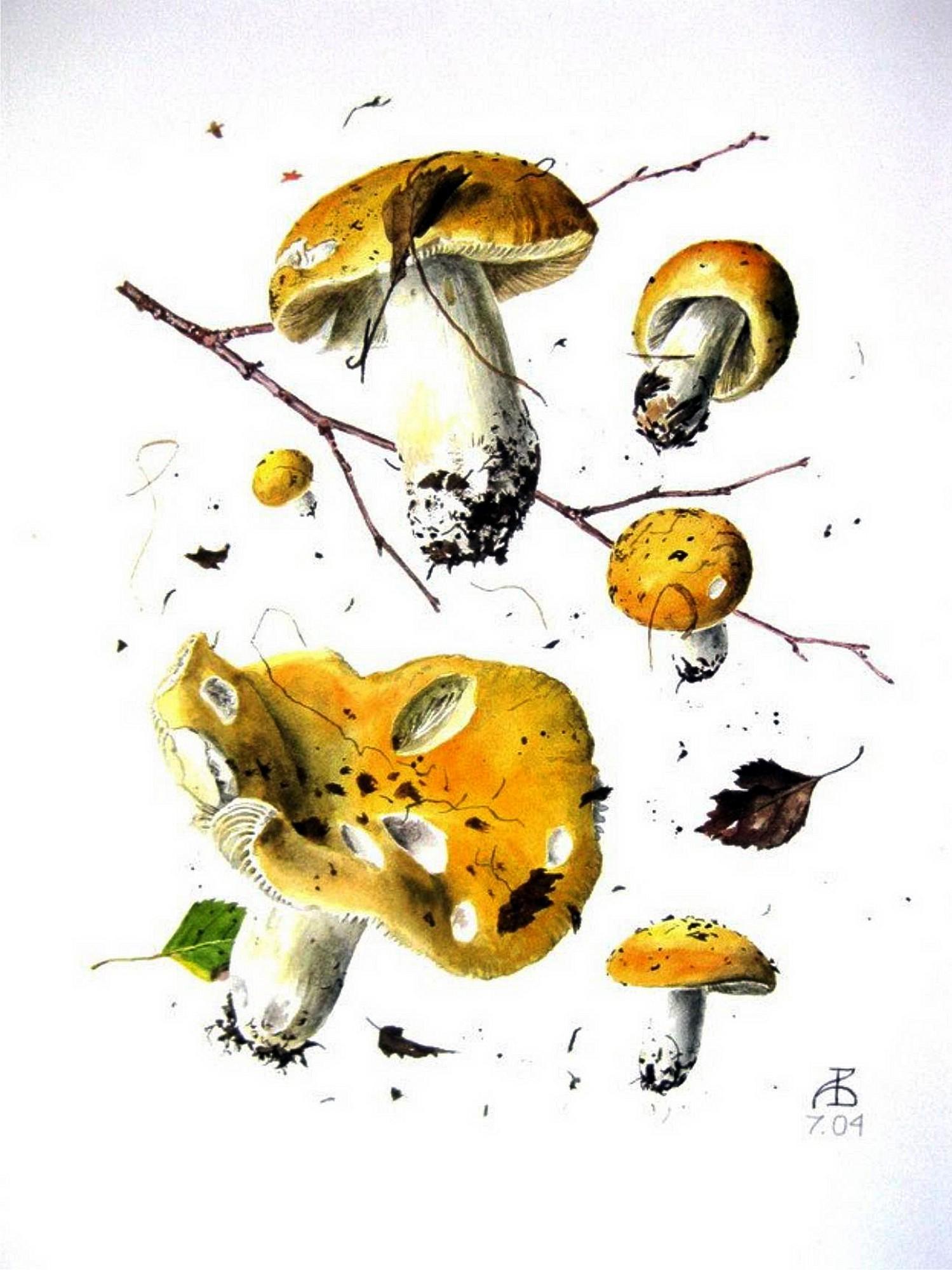 Сыроежка золотисто-жёлтая