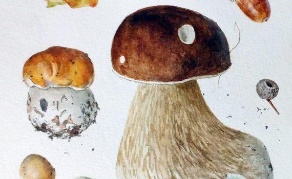 Белый гриб дубовый, или сетчатый