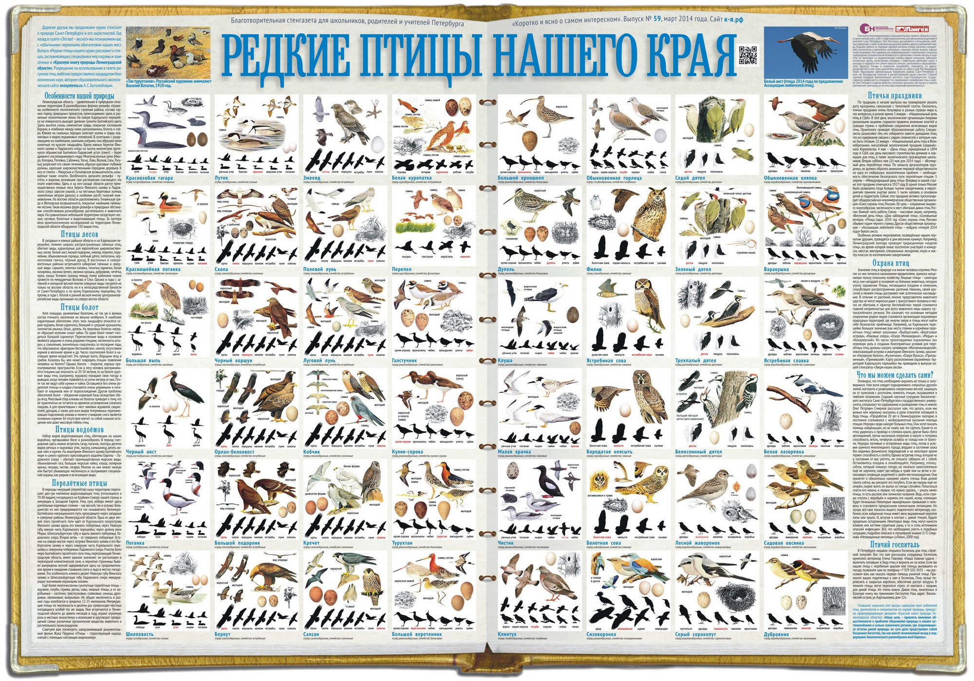 Стенгазета «Редкие птицы нашего края»