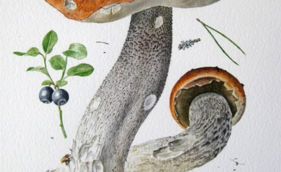 Подосиновик сосновый