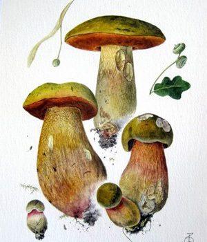Дубовик оливково-бурый
