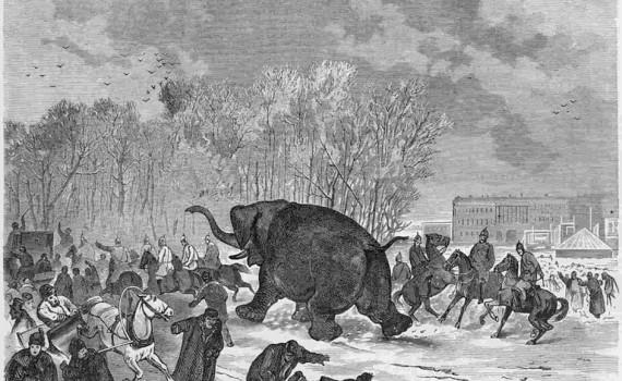 Бегство слона